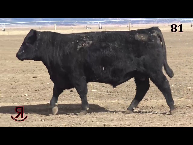 Reverse Rocking R Ranch Lot 81