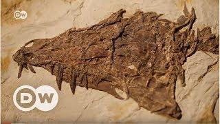 İnşaattan dinozor çıkarsa… - DW Türkçe