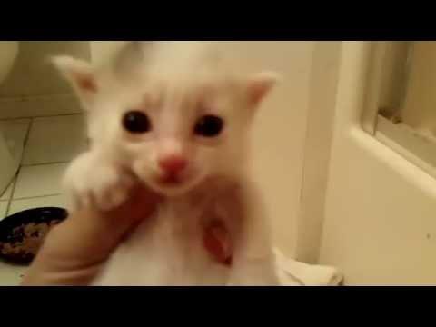 Missy's Kittens on 7/20/16