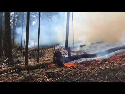 Bureau of Land Management conducting controlled burns