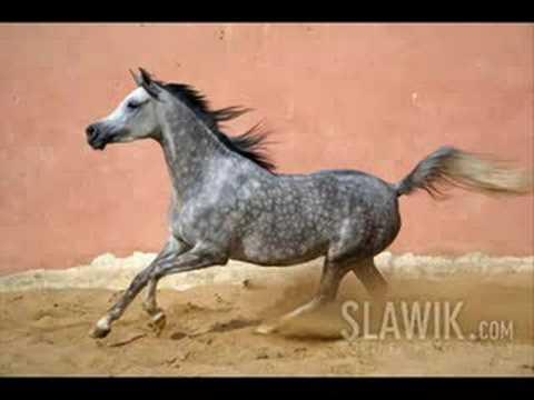 Maroc le royaume du cheval documentaire de 2002 sur l for Association miroir fes