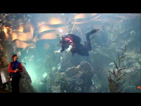 Seattle Aquarium dive show