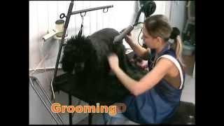 стрижка пуделя groomingdogs.ru