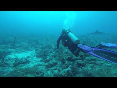 Tiburones en San Andres y Providencia