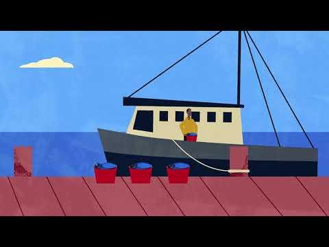 Global Fisheries Need Better Governance To Sustain Key Stocks