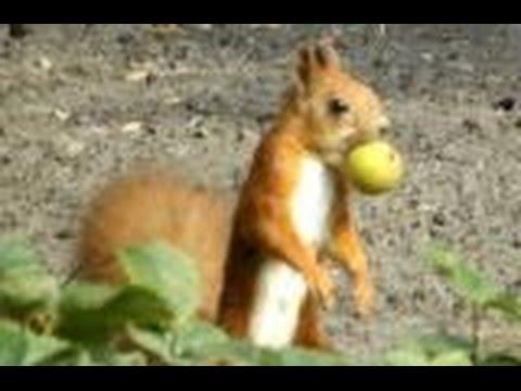 Осень, белка готовится к зиме. Squirrel