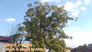 「楠(クスノキ)の詩」Music & played by Akira.U