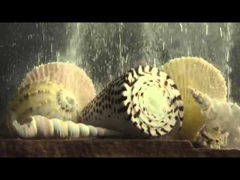 Racing Extinction by Academy Award-Winner Louie Psihoyos
