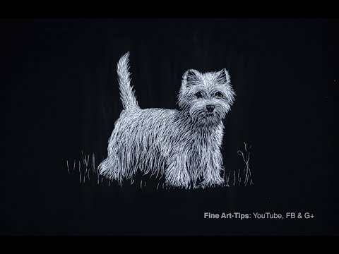How to Draw a West Highlands White Terrier (Dog) - Scratch Technique - Narrated