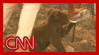 Grandmother rescues koala from bushfire
