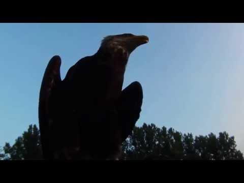 Grote vogel