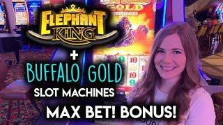 ELEPHANTS and BUFFALOS! MAX BET BONUS WIN!