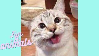 REAL FUN Funny Animals Collection 17 Приколы с животными смешные котики собаки