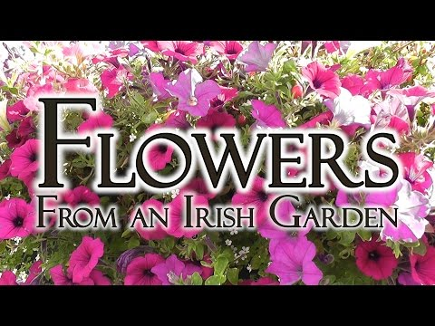 Flowers from Irish Hedgerows and Gardens