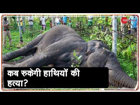 Kerala में हाथियों पर अत्याचार का सबसे बड़ा सच   Kerala pregnant elephant death