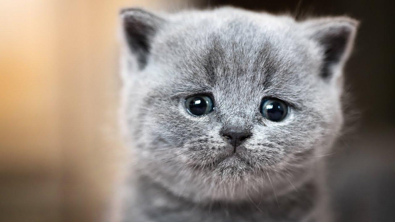 Самые смешные коты фото 2019 - Смешные кошки МатроскинТВ ...