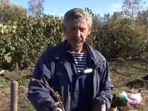 Зеленый сад фильм № 139 от 12.10.2013г. г.Хабаровск (zeleniisad.ru)