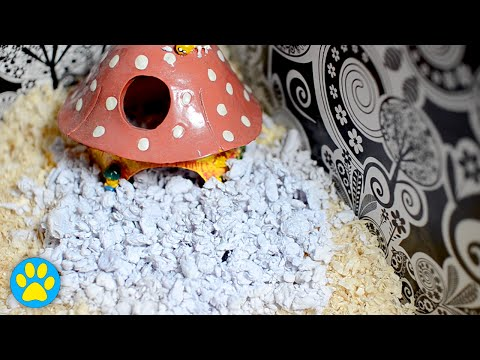 Easy DIY Paper Bedding For Hamsters, Mice & More