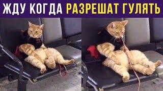Приколы. Кот ждёт, когда можно гулять   Мемозг #238
