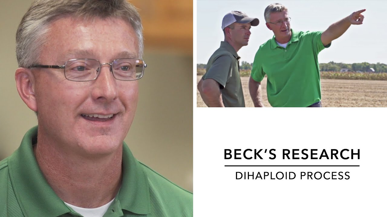 Beck's – Hybrid Corn Breeding – Dihaploid Process – Hybrid ...