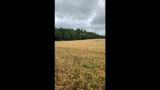 Dog Got Lost in the Field Trying to Find Owner