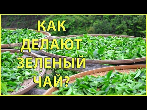 Как делают зеленый чай? | Технология производства зеленого чая | Чайгород