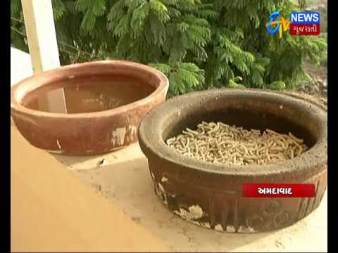 Ahmedabad: The house of dumb birds_Etv News Gujarati