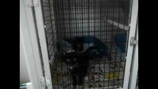 Sutter County Animal Services-Kittens