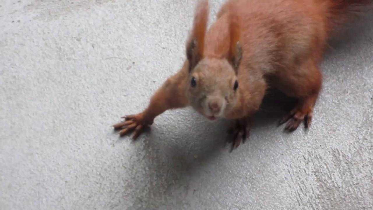 eichhörnchen kindergarten