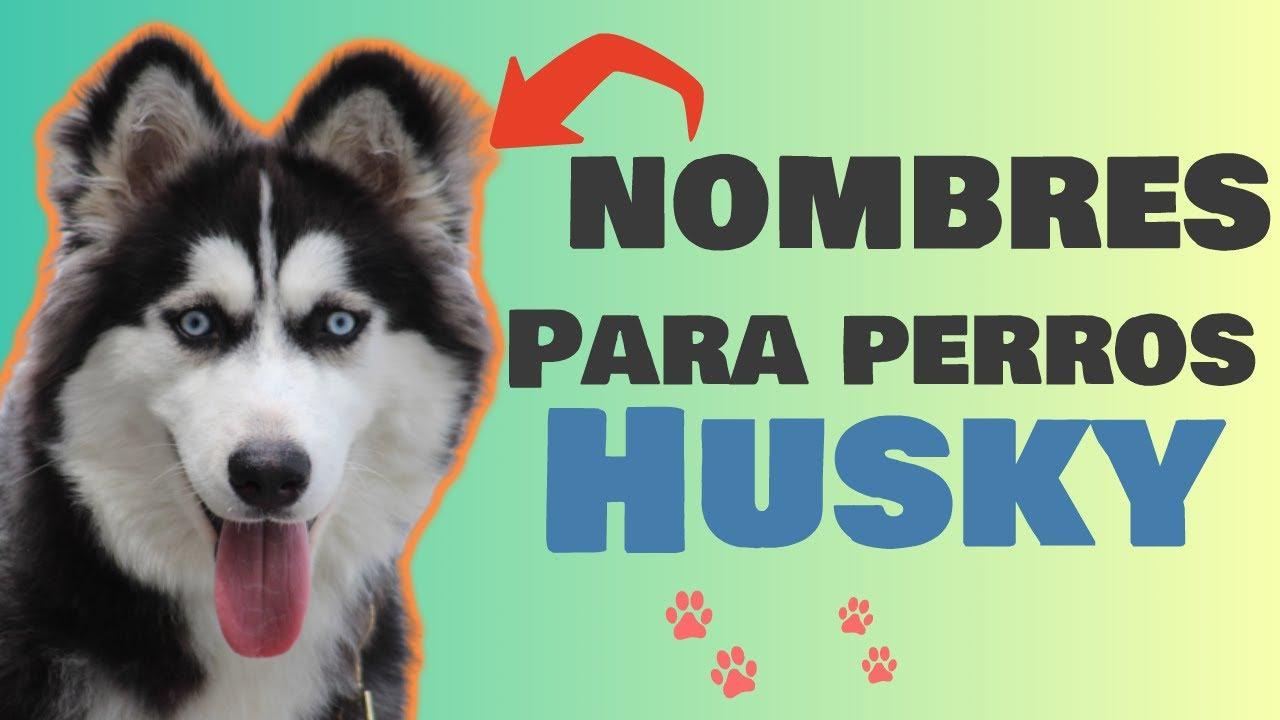 Los Mejores Nombres Para Perros Husky Para Machos O Hembras Youtube