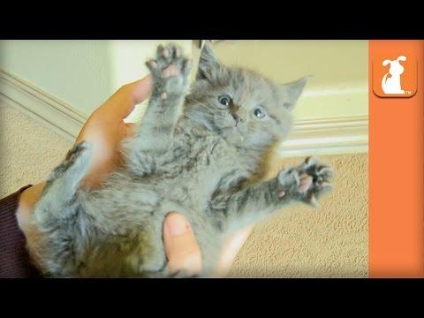Kitty Tickle Fight! So So So CUTE! - Kitten Love