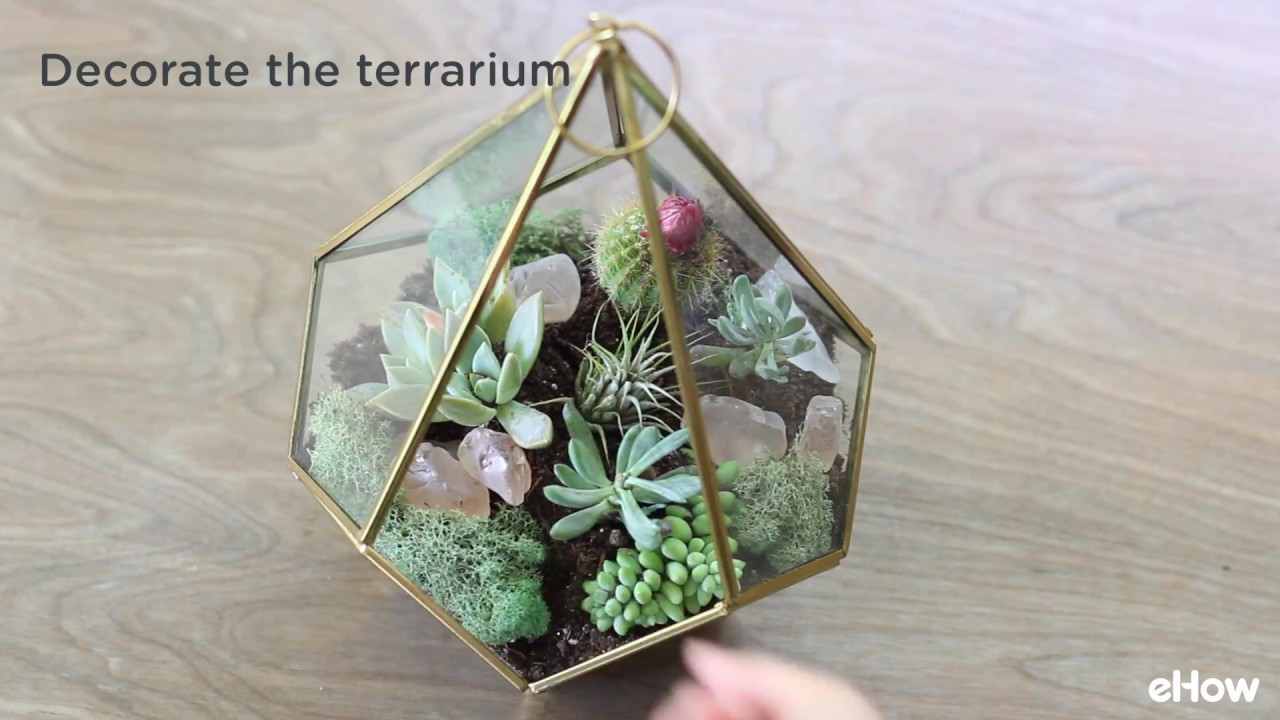 Easy To Make A Terrarium With Succulent Plants Tutorial Youtube