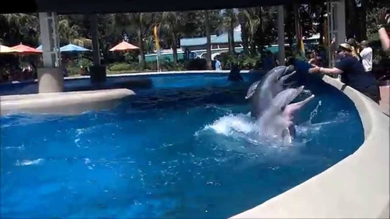 Dolphins Jumping Ages 6 Months And Older At Dolphin Nursery Seaworld Orlando