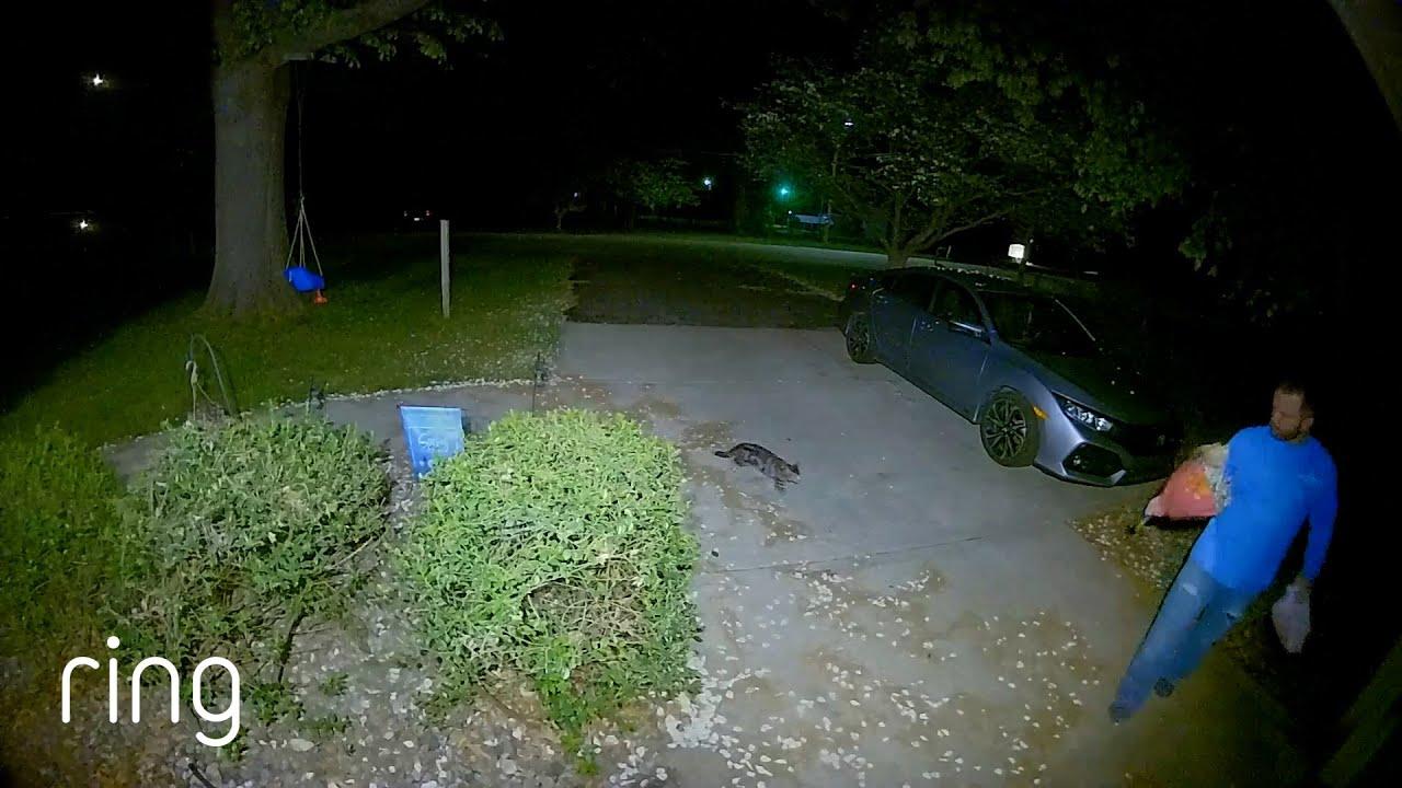 Sneaky Cat Plays a Prank on the Neighbor|RingTV