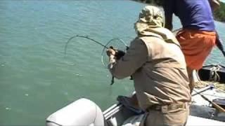 Pescaria de robalo em são caetano de odivelas