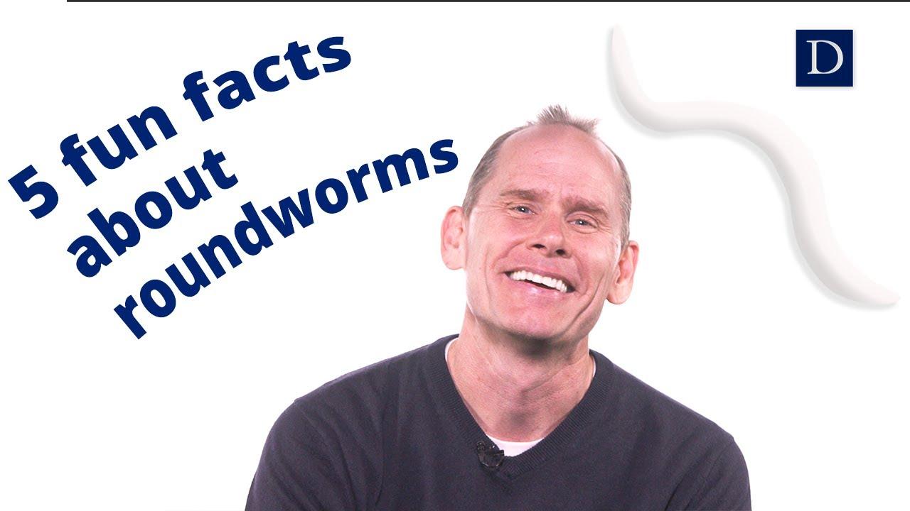 Roundworm este un medicament eficient - sanchi.ro