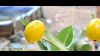 Cara membuat kerajinan dari kulit telur yang sederhana