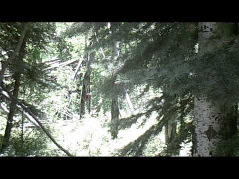 BIGFOOT RESEARCH ANNOUNCEMENT FOR LONG TERM STUDY OF 2015