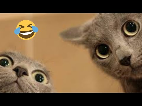 Cute baby cats Videos Compilation cutest moment of the funniest cats - Soo funny! #8