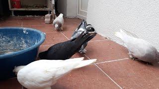 Güvercinlerimizi uçurduk yavruyu ucurduk