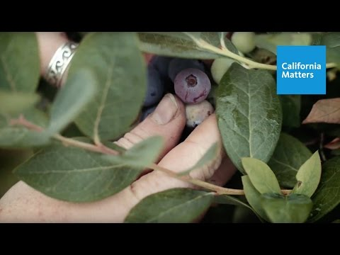 The Roots of Organic Farming on Campus