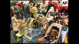 Pet owners and their pets join parade to promote animal welfare