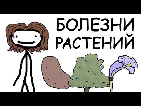 БОЛЕЗНИ РАСТЕНИЙ | SAM O'NELLA ACADEMY | РУССКИЙ ДУБЛЯЖ