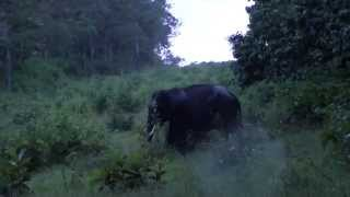 A Single Tusker - Wild Elephant on the Bandipur Mudumalai National highway