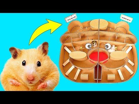 Copito o Hamie? Quin ganar la gran carrera de Hamsters?