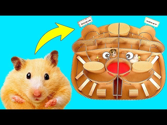 Copito o Hamie? Quién ganará la gran carrera de Hamsters?