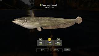 Russian Fishing 4 2021 02 15 сом амурский 12 12 49 02