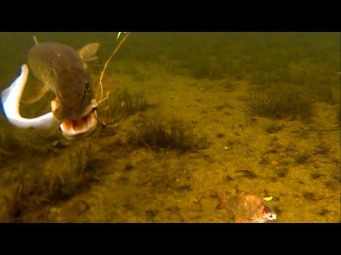 Pike Attacks Sea Lamprey. Fishing With Dead Baits. Рыбалка: атака щуки на морскую миногу.