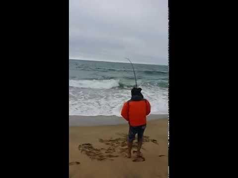 2edf1eca005 Montara Beach Surf Fishing - 2nd Striped Bass - YouTube