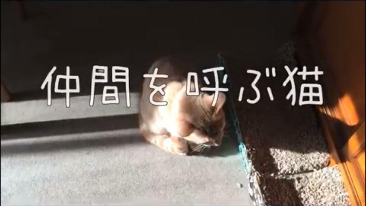 音声 猫 の 鳴き声